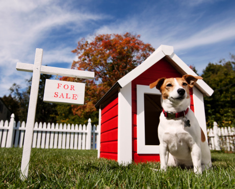 Tips for Selling a Home with Pets