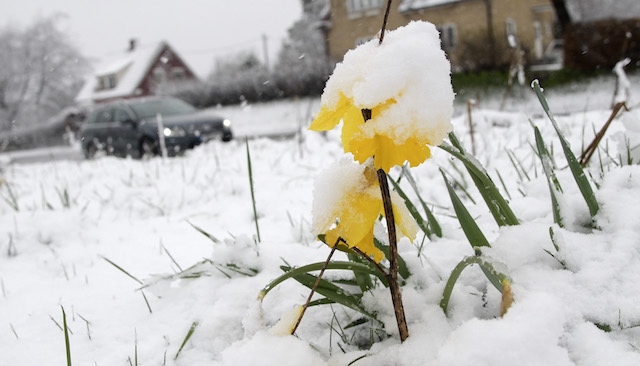 Too Snowy for Spring: How this is Effecting Real Estate